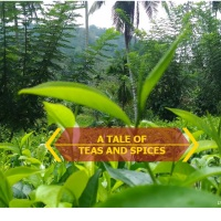 Delegation Days in Sri Lanka: A Tale of Teas and Spices