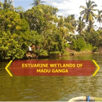 Delegation Days in Sri Lanka: Estuarine Wetlands of Madu Ganga